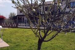 albero fiorito 1